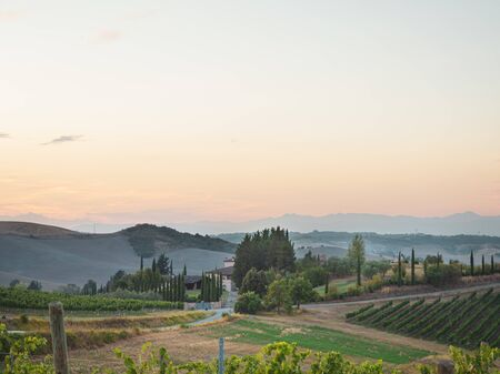Grape field of vines in the countryside of Tuscany, near Florence with a farm in the distance Banco de Imagens