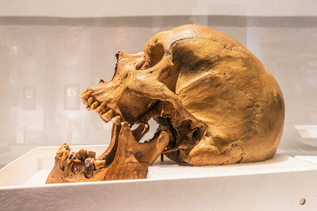 Neanderthal skull and big jaws, as seen from aside. Isolated against a white background