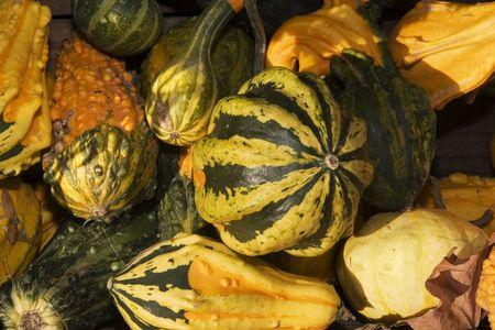Decorative pumpkins displayed on the farm market Stock Photo