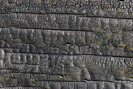 Burnt wood texture as a natural background