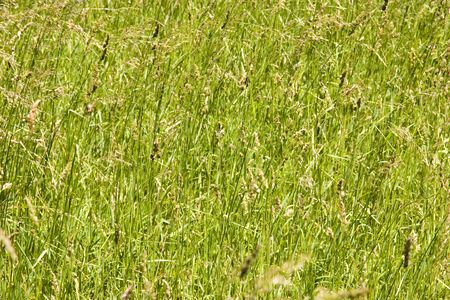 Grass field as a natural background Stock Photo