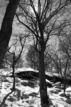 Sunny winter day, trees, snow, rocks. Black and white.