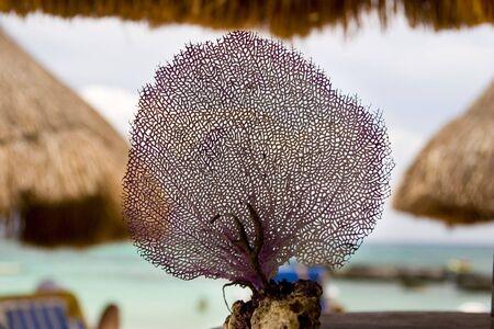 Purple coral on the Caribbean beach, shallow DOF.