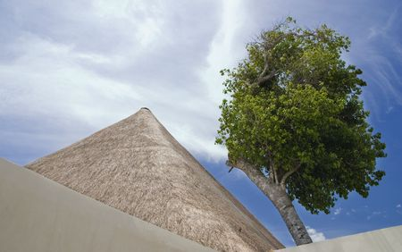 palapa: Palapa roof and a tree against a cloudy sky - shapes and nature