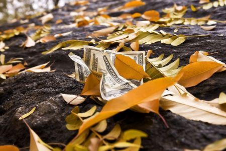 $20 dollar bills on the ground with fallen leaves.