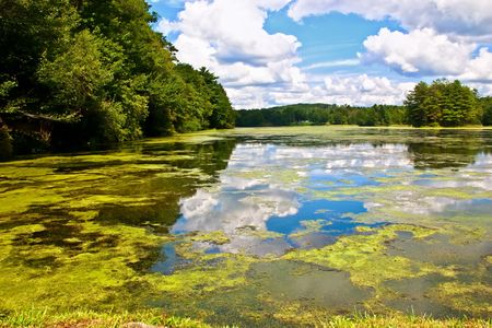 Algae on the small lake