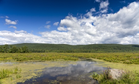 forest management: Bashakill Wildlife Management Area  Upstate New York on the summer day