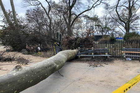 hurricane sandy: NEW YORK - NOVEMBER 1, 2012 Fallen trees caused by Hurricane Sandy block street  in Brooklyn NY, near Asser Levy Park on November 1, 2012, Brooklyn, NY Editorial
