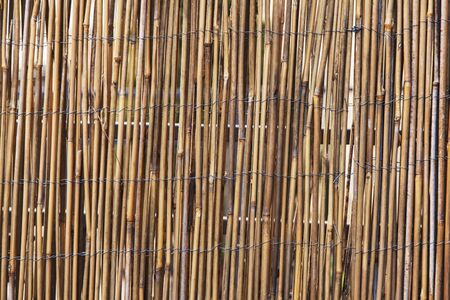 Bamboo fence as a background photo