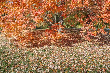 indian summer: Colorful Indian summer with fallen leaves