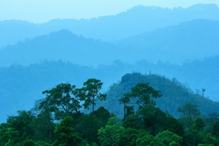 Mountain forest in the morning, Thailand photo