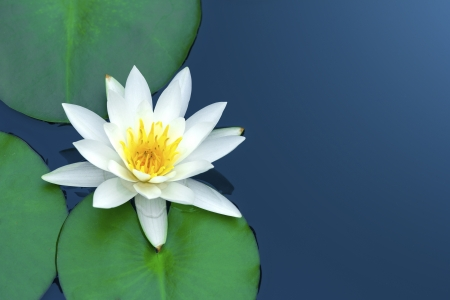 White lotus with green leaves on blue water. Stock Photo