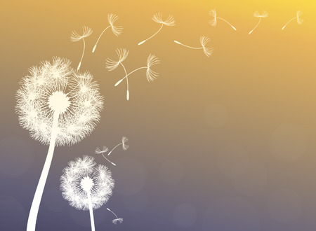 dandelion wind: vector dandelion on a wind loses the integrity