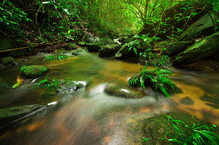 Babbling Brook in Green Forest photo