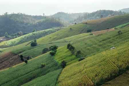 bong: Green Terraced Rice Field in PA bong piang Chiangmai, Thailand