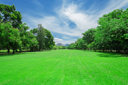 green grass field in big city park 版權商用圖片