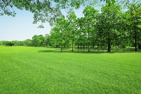 Árbol verde y pasto verde en parque público con cielo azul claro. Foto de archivo