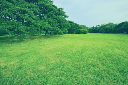 Parki i zielone drzewa na wiosnę. Tło natury