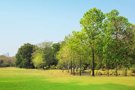 The park has lawns and is full of trees.