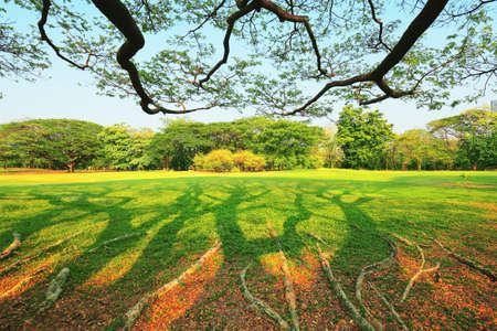 The park has fresh green lawns. On a sunny day