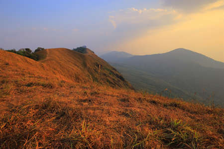 yellow field on top of the mountain at Monjong, Chiang Mai, Thailand Standard-Bild