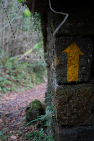 Arrow pointing up in a nature path in the middle of a forest