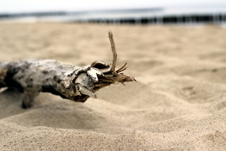 seclusion: Wooden branch on sandy beach close up background Stock Photo