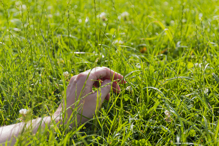Hand on green lush grass, relaxation and freedom concept