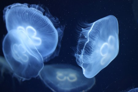 Photo of a Jelly Fish in blue ocean water in the dark 5