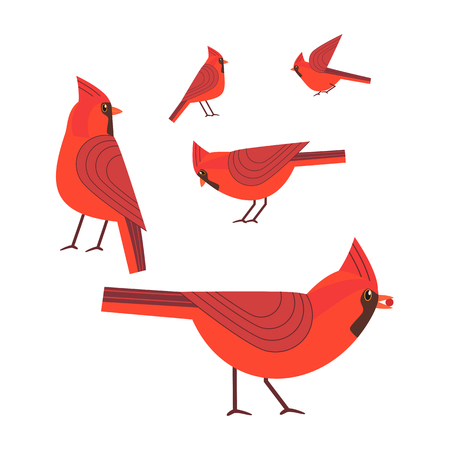 Red cardinal bird set Stock Illustratie