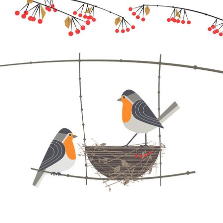 Red cardinal birds couple Stock Photo