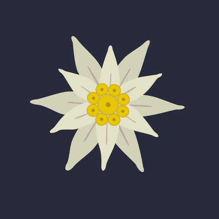 Edelweiss flower icon