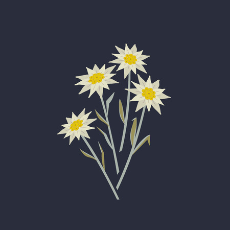 Hand drawn edelweiss flowers icon