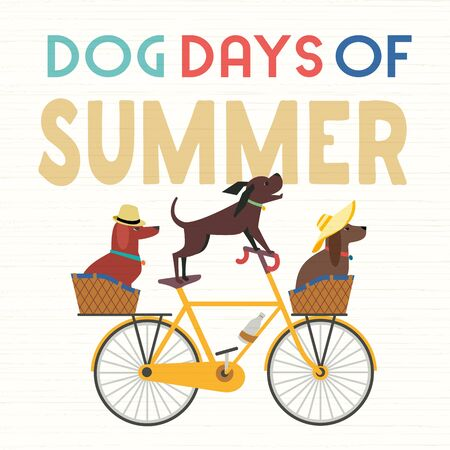 Dog days Summer Time. Cute comic cartoon. Colorful humor retro illustration. Cute pet dogs riding bicycle to enjoy beach leisure relax. Summertime vacation journey. Vector banner background template