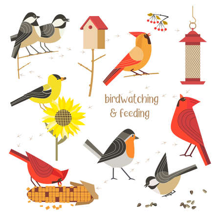 Bird watching feeding vector icons collection