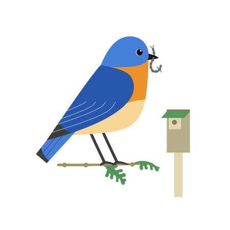 Eastern bluebird cute flat color vector icon 向量圖像