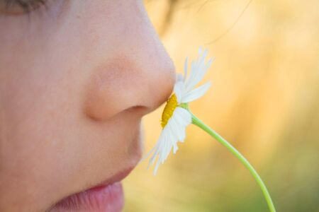 smell: smell the white flower