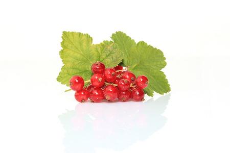 currant: Currant fruits
