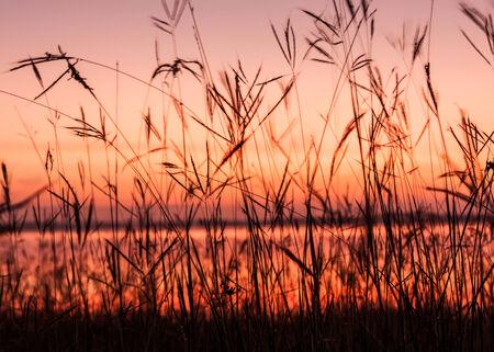 randomness: grass silhouette after sunset background