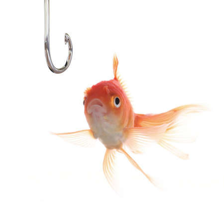 fish hook: A surprised goldfish looking at a hook. Stock Photo