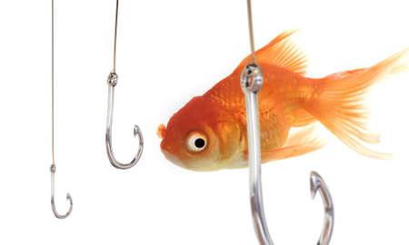 A goldfish swiming surrounded by hooks. Фото со стока