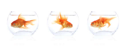 Different shots of goldfish in a small bowl.
