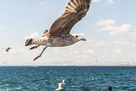 Freedom, seagull and sea Stock Photo