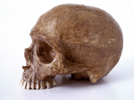 decoration. With out jaw bone. Path included in file. Stock Photo - 225248
