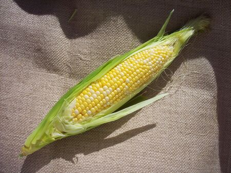 Corn on the cob on burlap taken in natural light.
