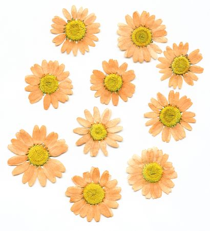 Dried pressed flowers on white background.
