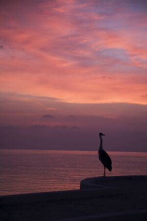 Heron at sunset photo