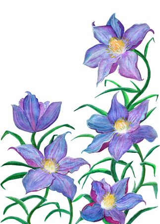 lily flowers: Blue lily flowers, watercolor illustration