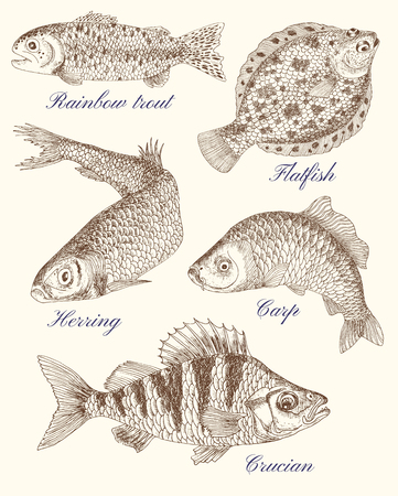 Design graphic set with drawings of fishes and texts