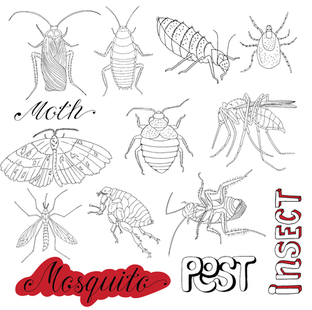 mite: Hand drawn set with pests, bloodsucking insects, mosquito, mite, bug and cockroaches isolated. Doodle line art illustration and graphic sketch, invaders vector with icons